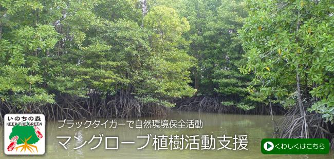 マングローブ植樹活動支援