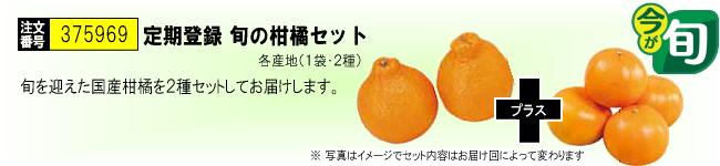 定期登録 旬の柑橘セット